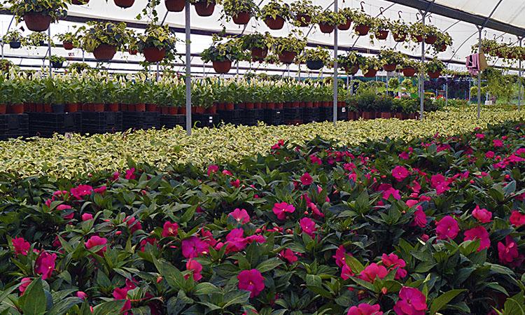 Viveros de cabrera y las flores de atlixco puebla dos 22 for Plan de negocios de un vivero de plantas
